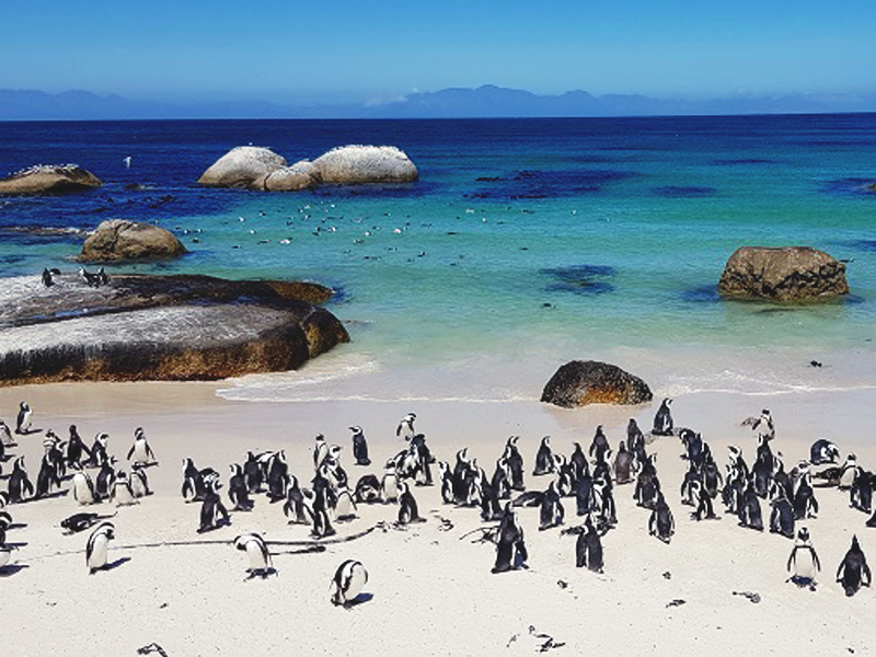Pingwiny na plaży