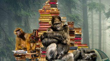 Małpy zksiążkami