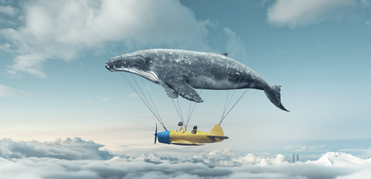 Wieloryb leci nad samolotem w obłokach