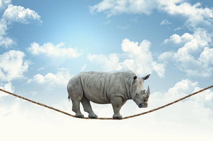Nosorożec na linie